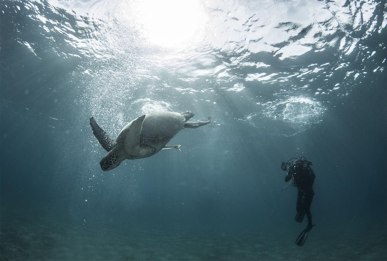 elizabeth_streeter_turtle_diver_small.jpg