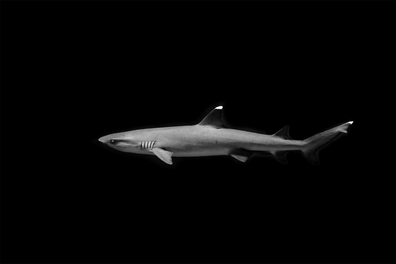 william_davidson_shark_small.jpg