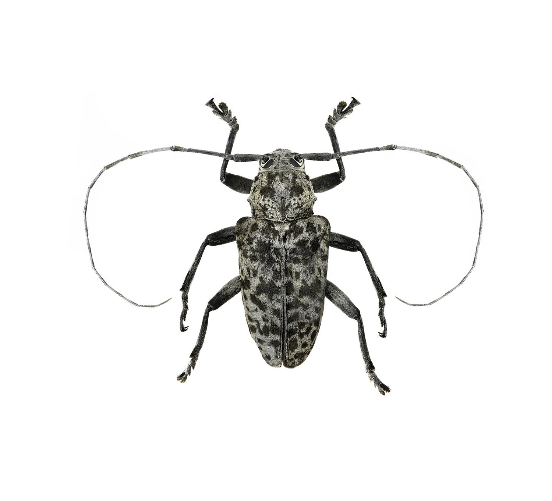 felix_bartlett_fur bug_small.jpg