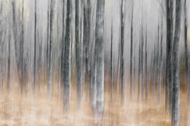 tierney_lloyd_trees_small.jpg
