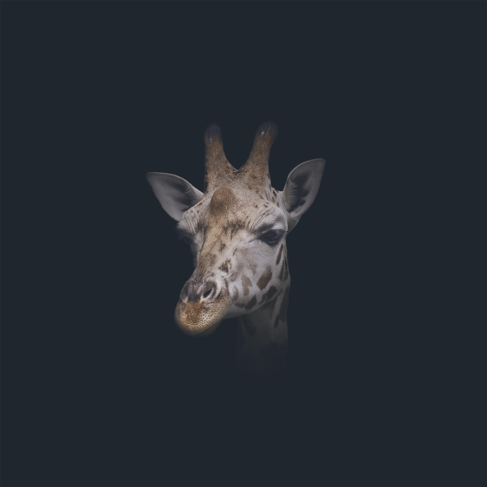 AE_Giraffe.jpg