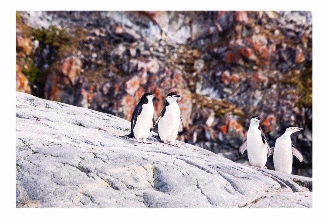 Antarctica - Project We Travel.jpg