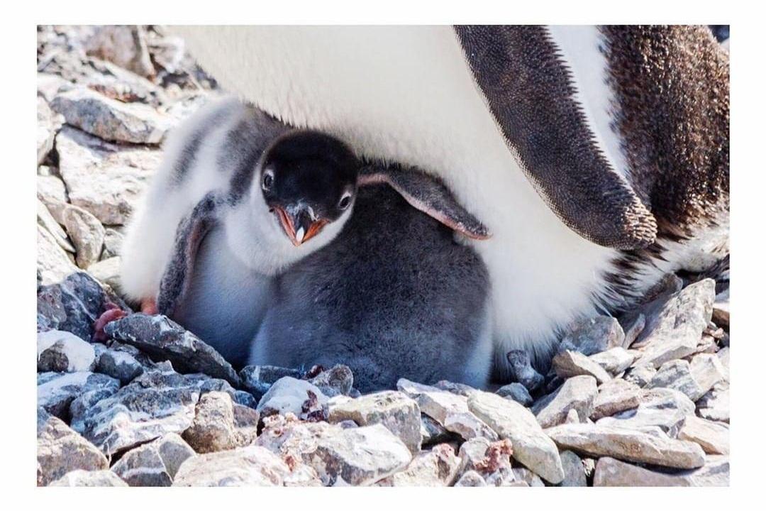 Antarctic+Peninsula+animals+-+Project+We+Travel.jpg