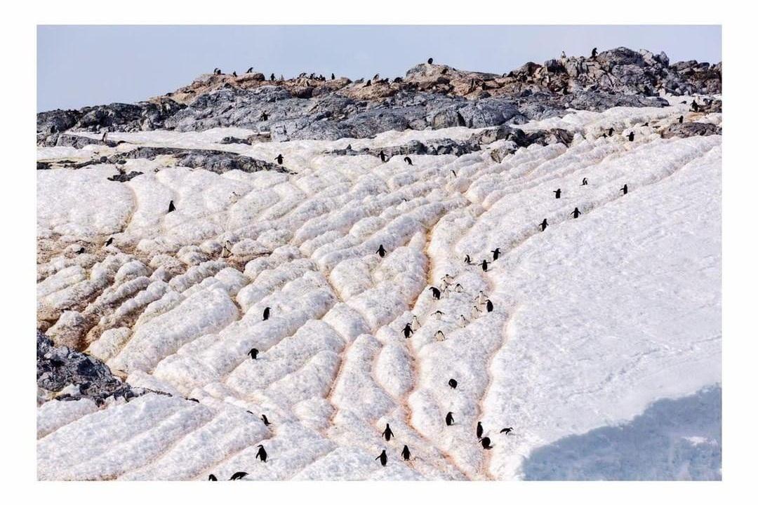 Penguins Antarctica Project We Travel.jpg