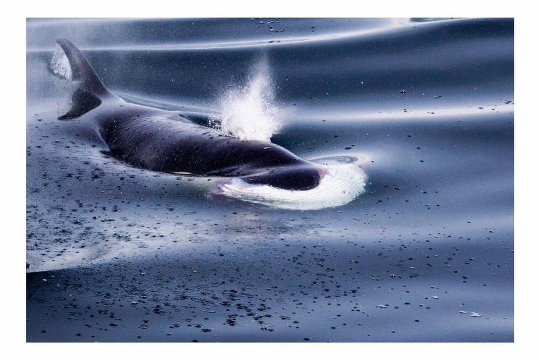 Sea World Antarctica Project We Travel.jpg