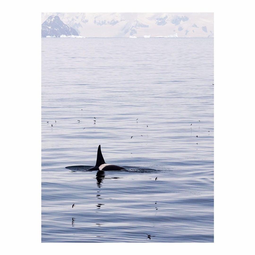 Antarctica Project We Travel (4).jpg