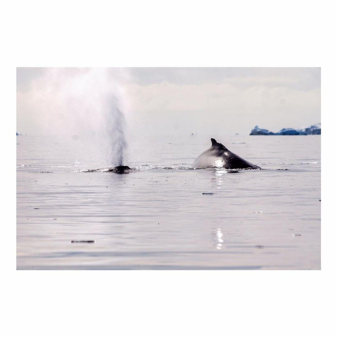 Antarctica Project We Travel (10).jpg
