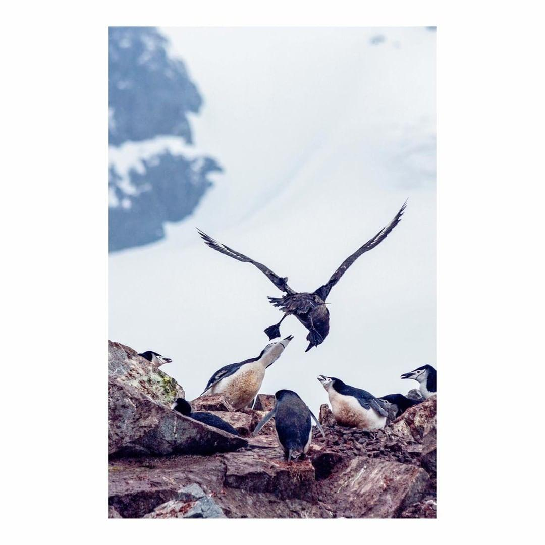 Antarctica Project We Travel (11).jpg