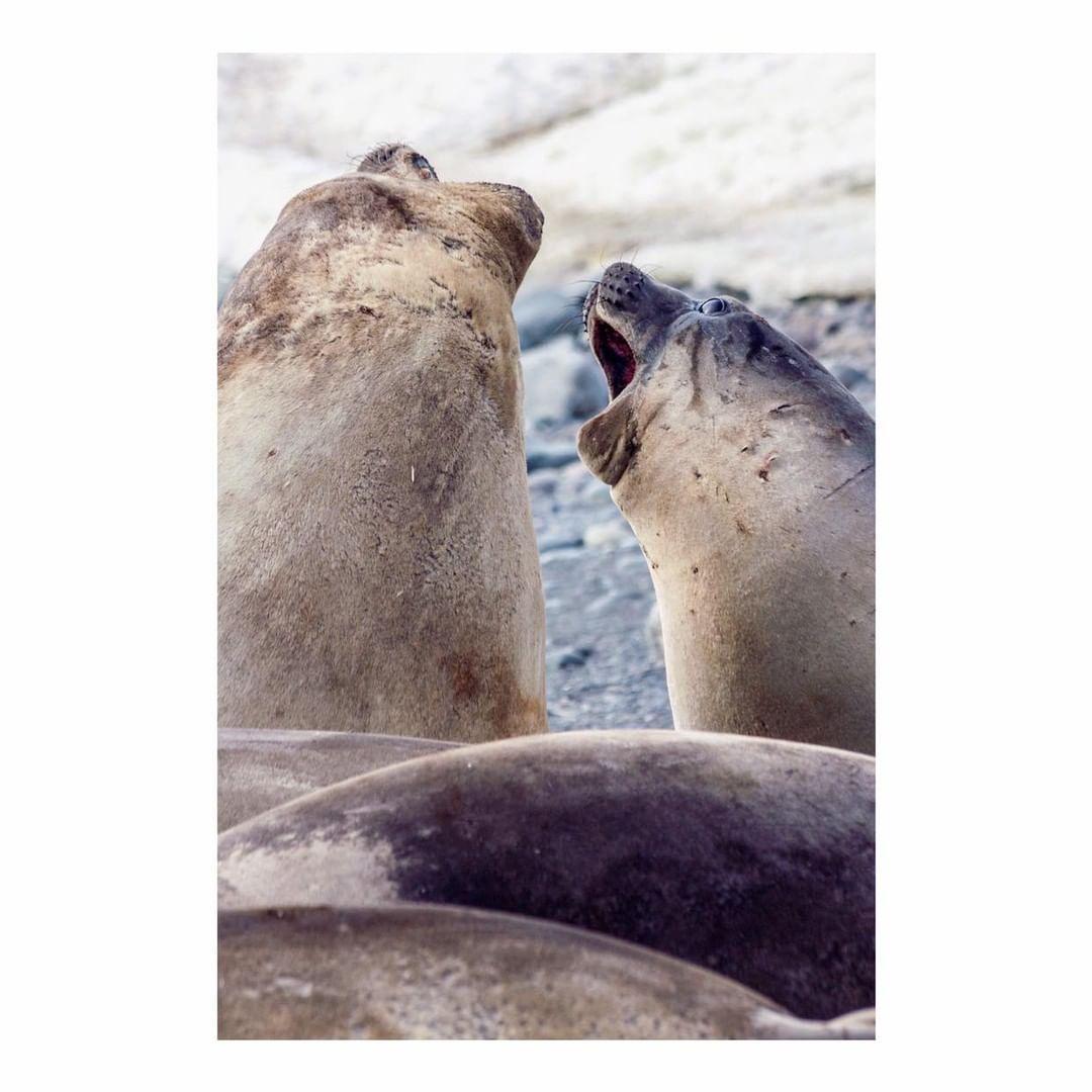 Antarctica Project We Travel (18).jpg
