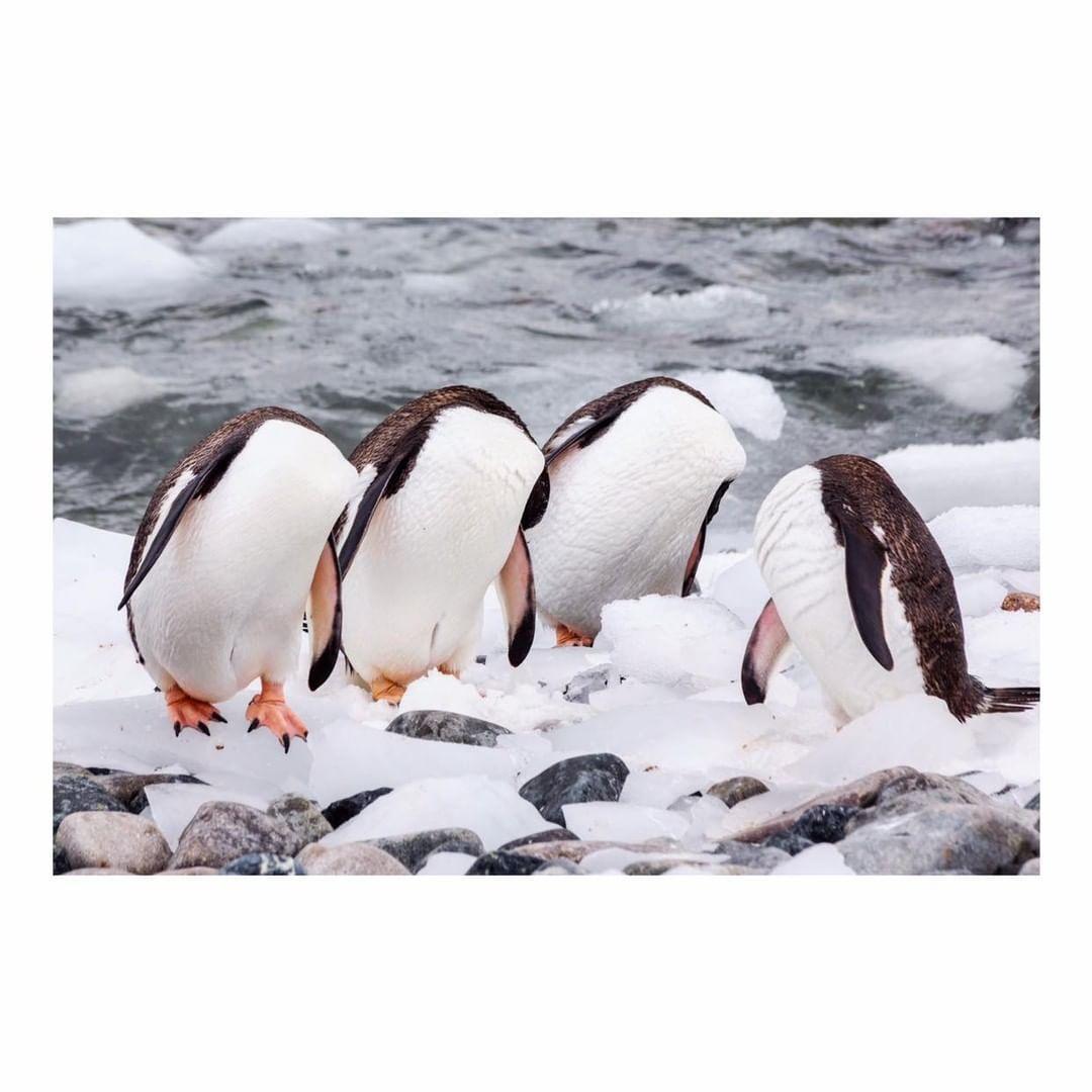 Antarctica Project We Travel (36).jpg