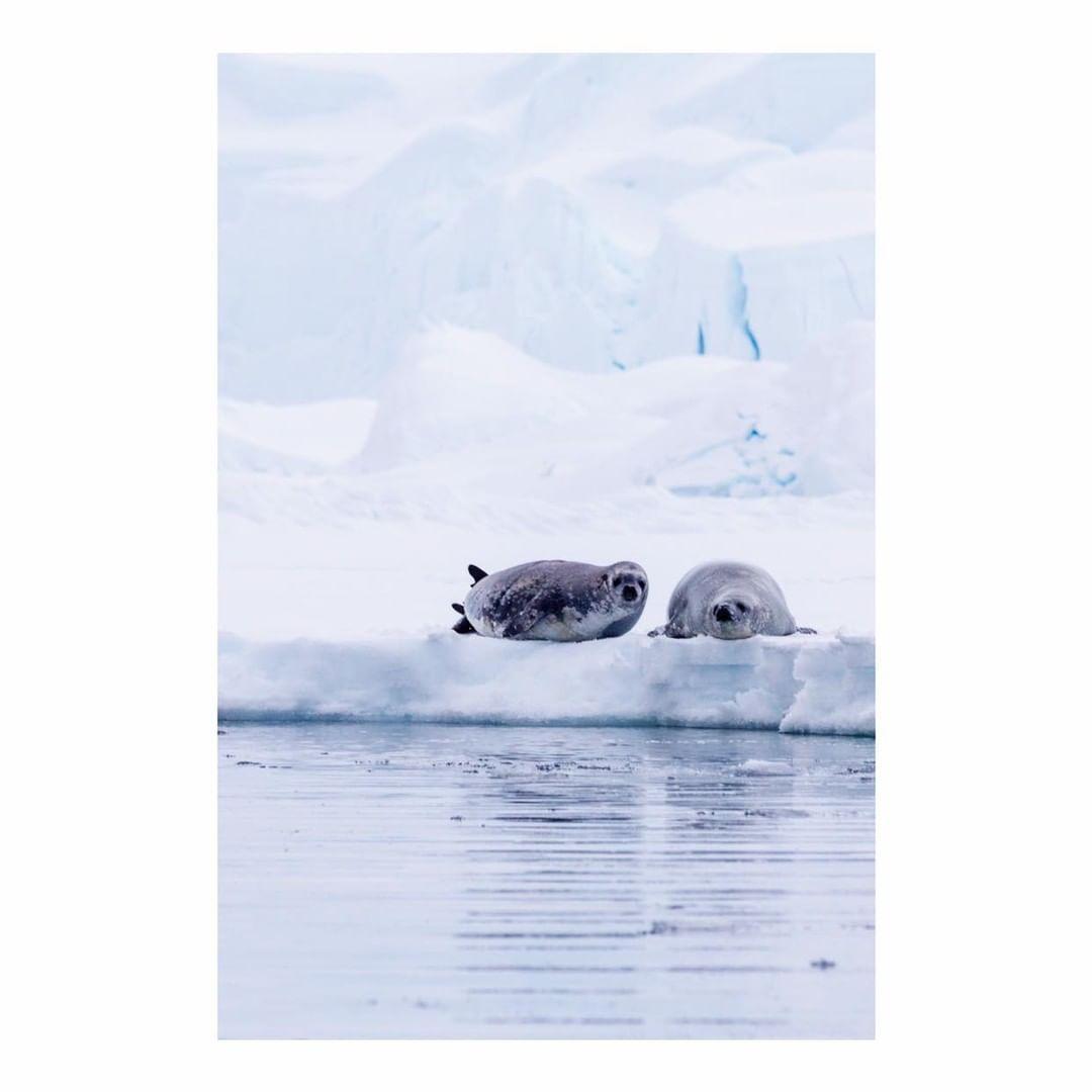 Antarctica Project We Travel (52).jpg