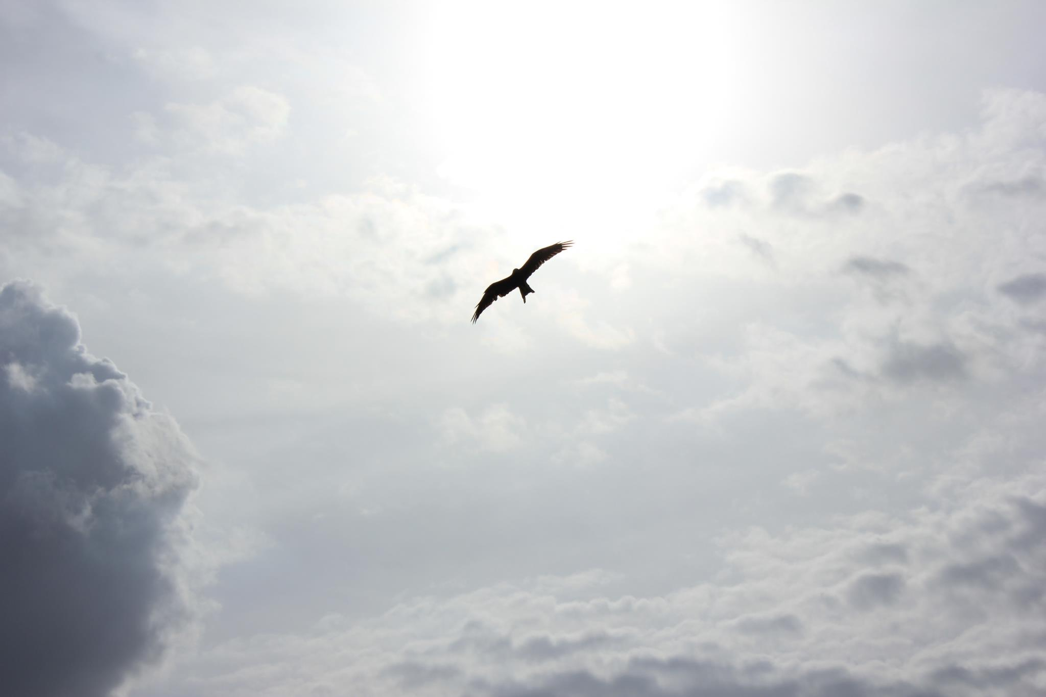 A bird soaring in a sunny sky with clouds