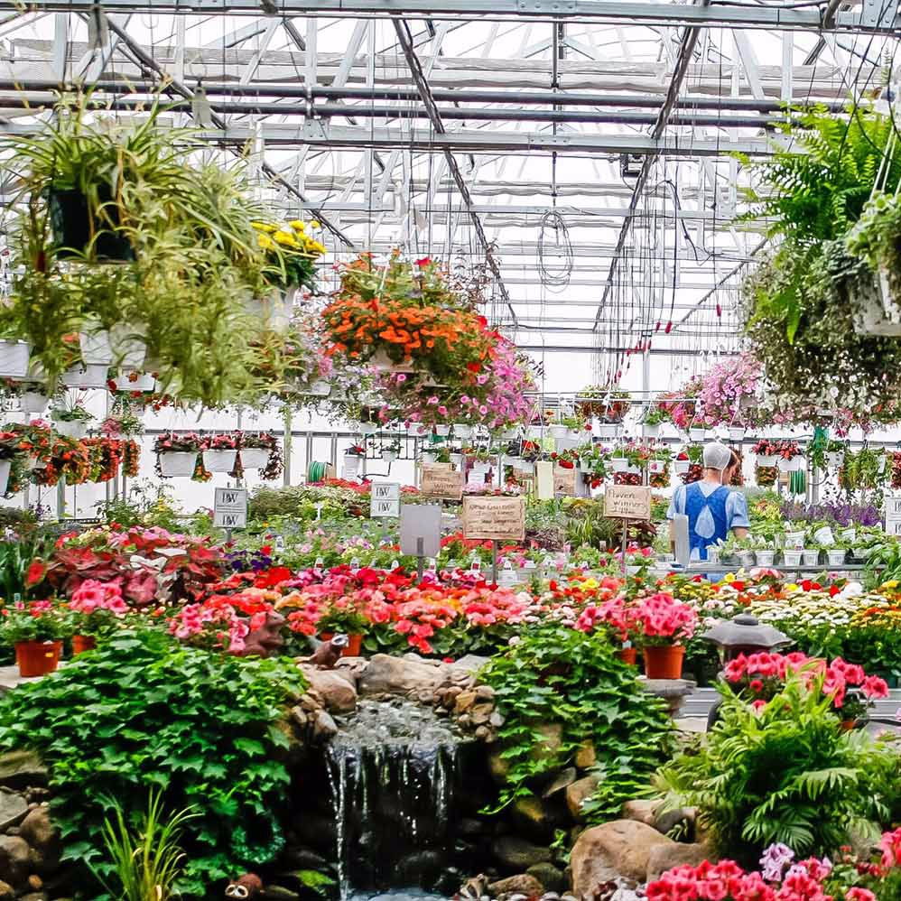 hornings greenhouse - benton, New York     Photo COURTESY of the yates chamber of commerce
