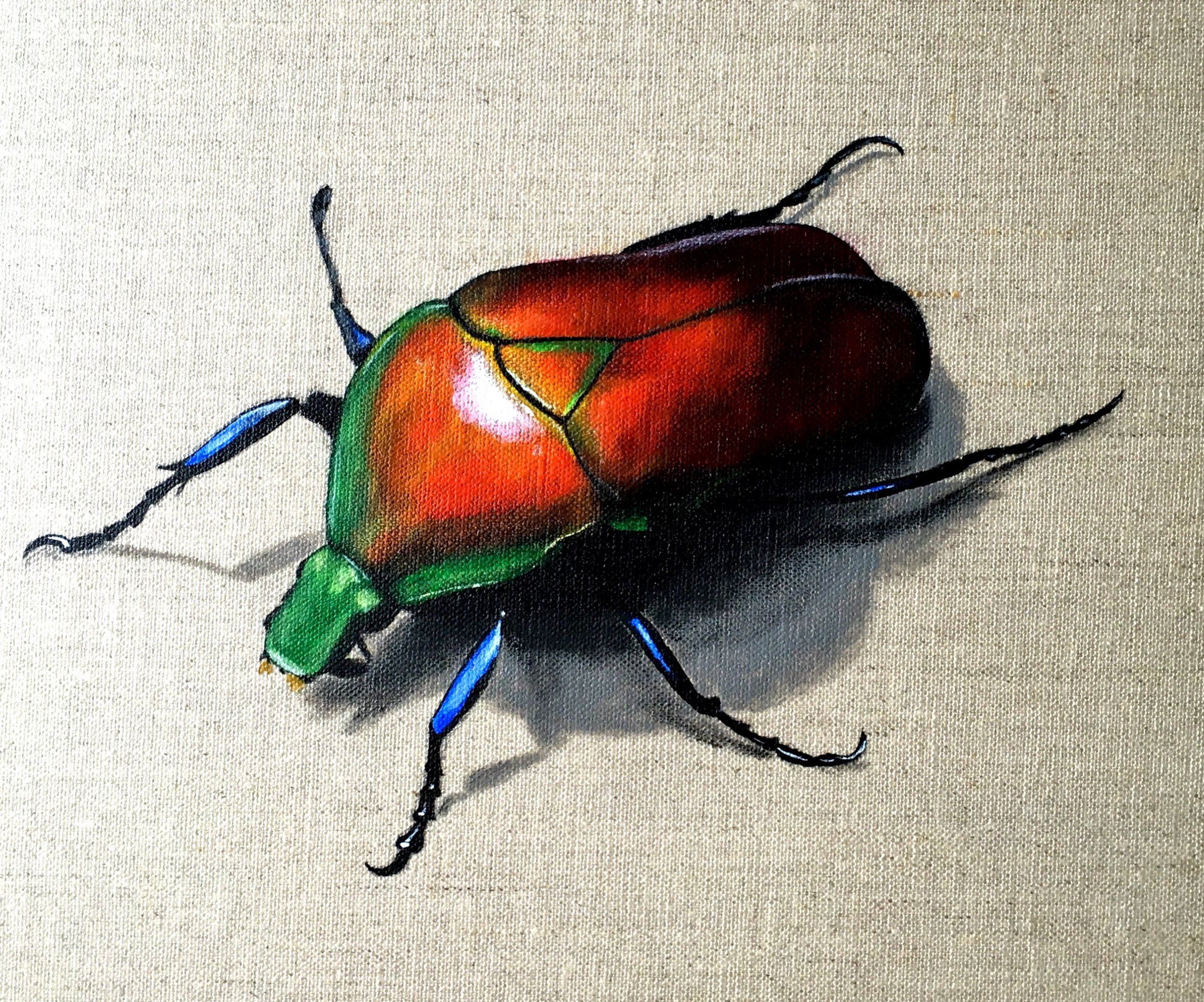 Colourful Beetle