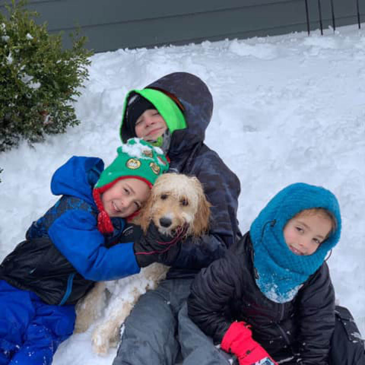 Whitney Dogs3.jpg