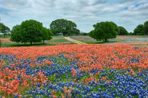 texas-wildflowers.jpg