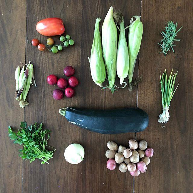 CSA Week 12: Tomatoes  Corn Rosemary Green onions Zucchini Potatoes  Onion Parsley Baby corn Crab apples