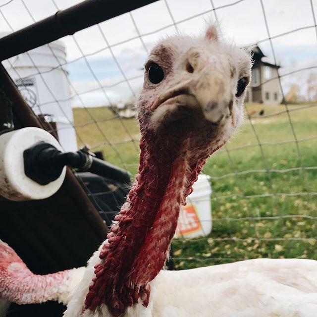 Happy Thanksgiving 🦃❤️