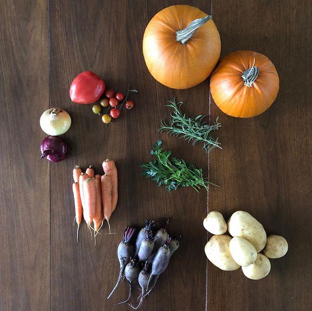 CSA week 14: Pumpkins Potatoes  Beets Carrots Onions Tomatoes Rosemary Parsley