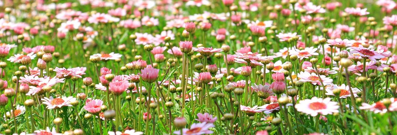 SPRING flower-meadow-.jpg