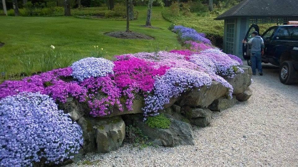 Gardens by Joanne 1.jpg