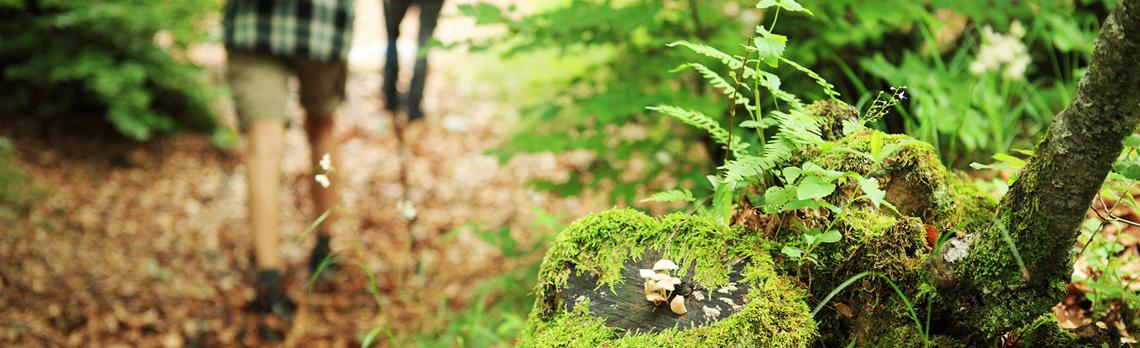people-walk-in-woods-rev.jpg