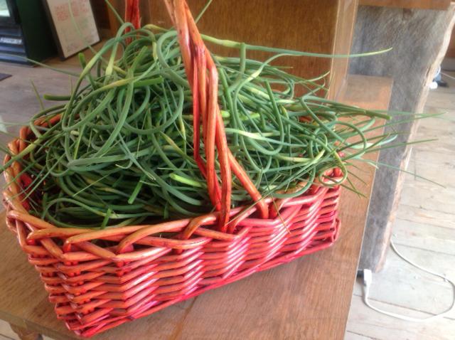 VILLAGE FARM garlic scapes 1.jpg
