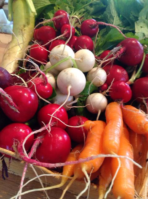 VILLAGE FARM carrots radishes etc.jpg