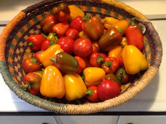 VILLAGE FARM sweet peppers.jpg