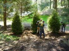 treeplanting4.jpg