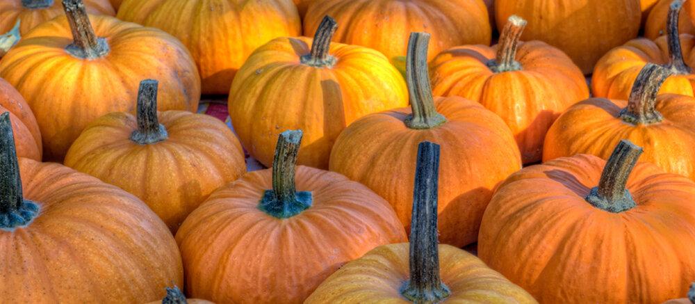 fall pumpkins rev.jpg