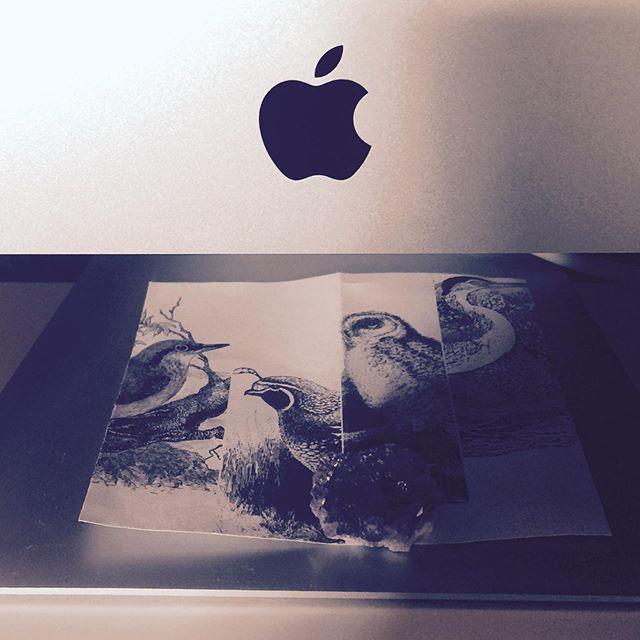 #atmydesk #mac #cardinalandfinch #birds #amethyst