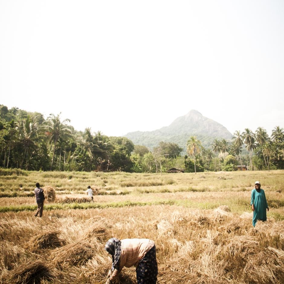 Tea Farmers, Sri Lanka.