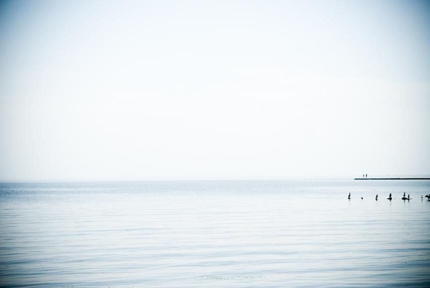 --Sea Birds.jpg