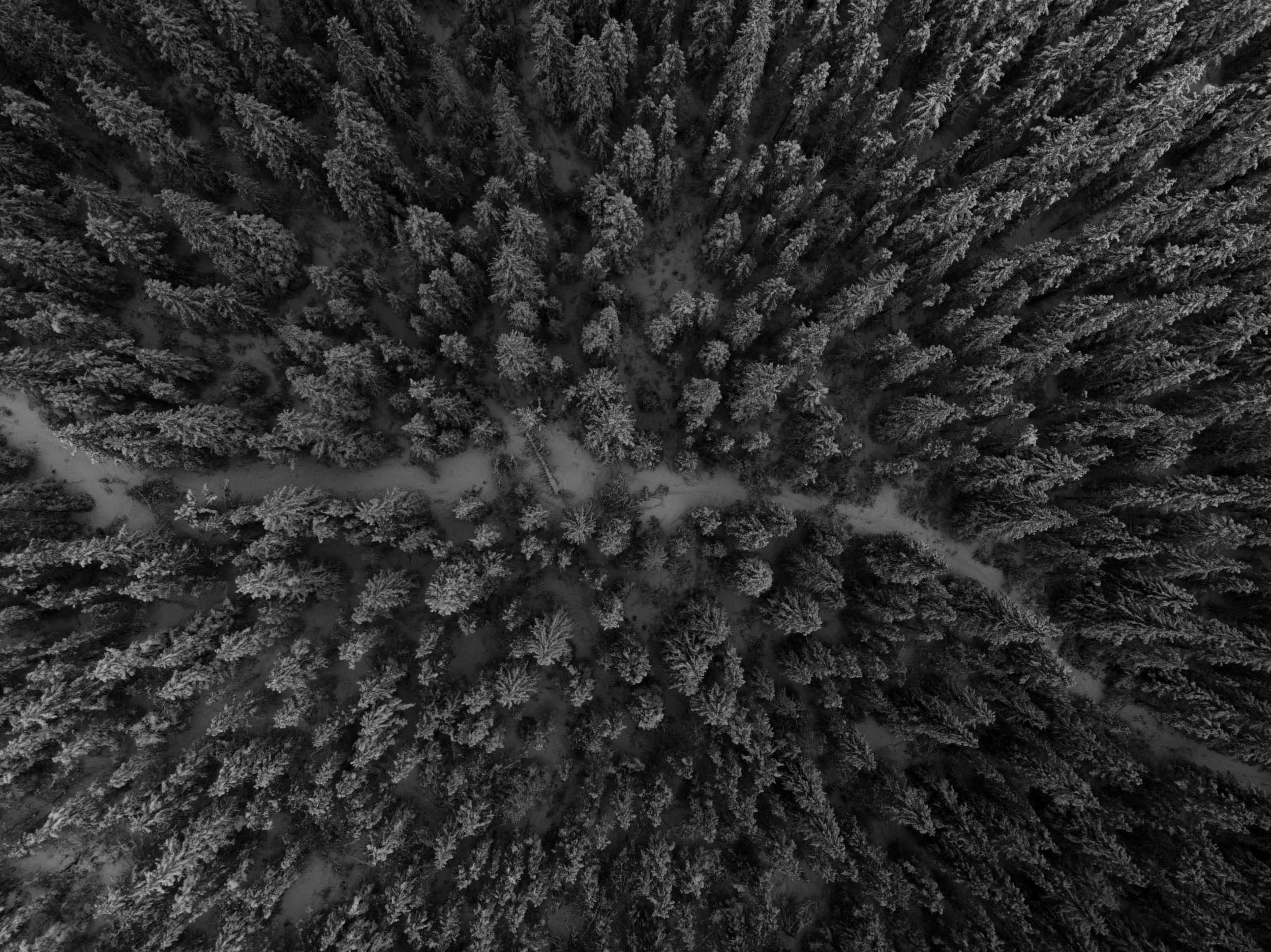 DroneShots-19.jpg