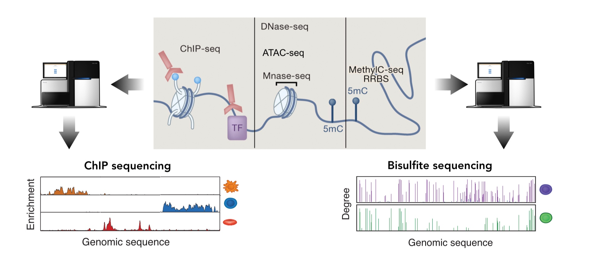 - We use next-generation sequencing technology to profile epigenetic modifications at genome-wide levels.