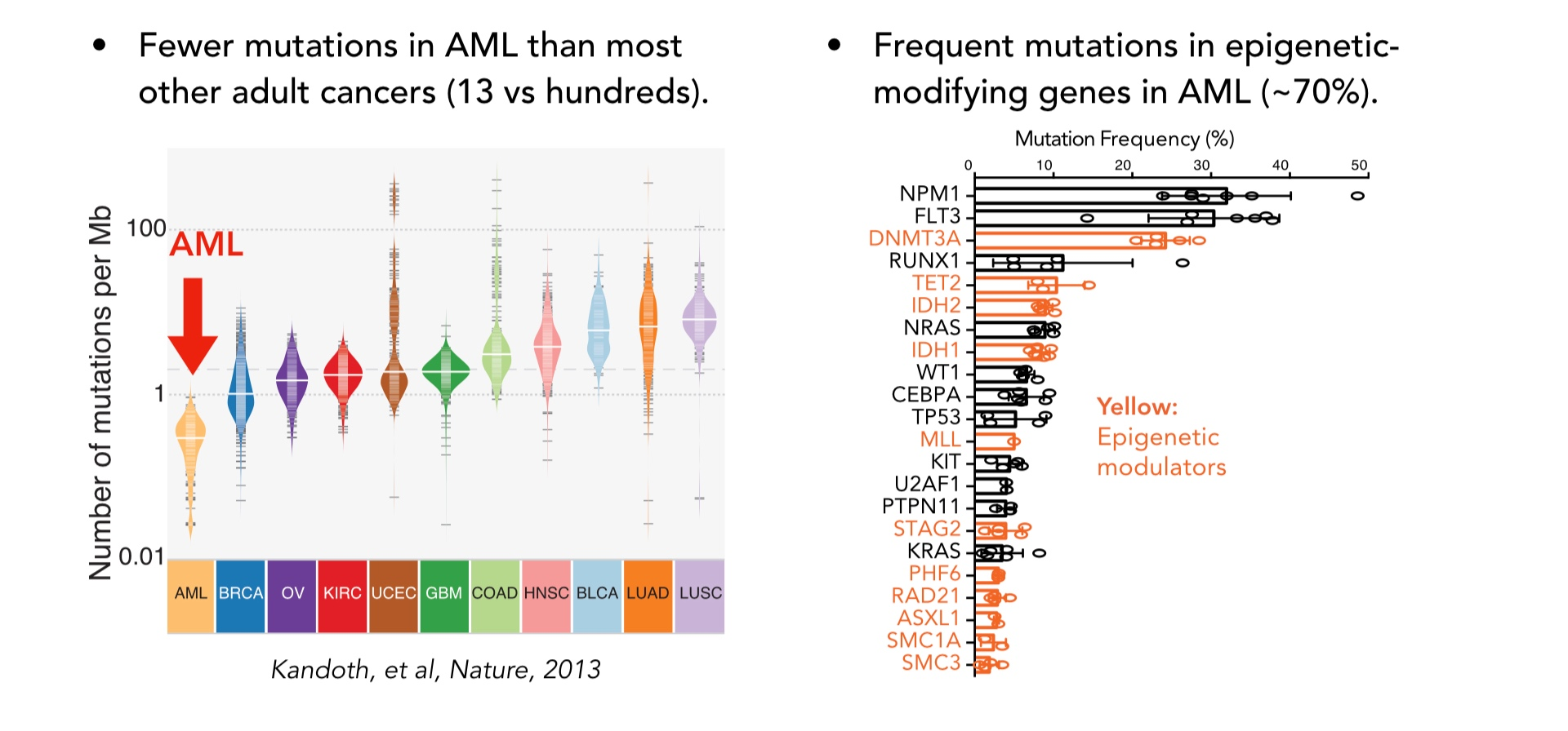 - We use AML as a model to study cancer epigenetics because of its unique characteristics.