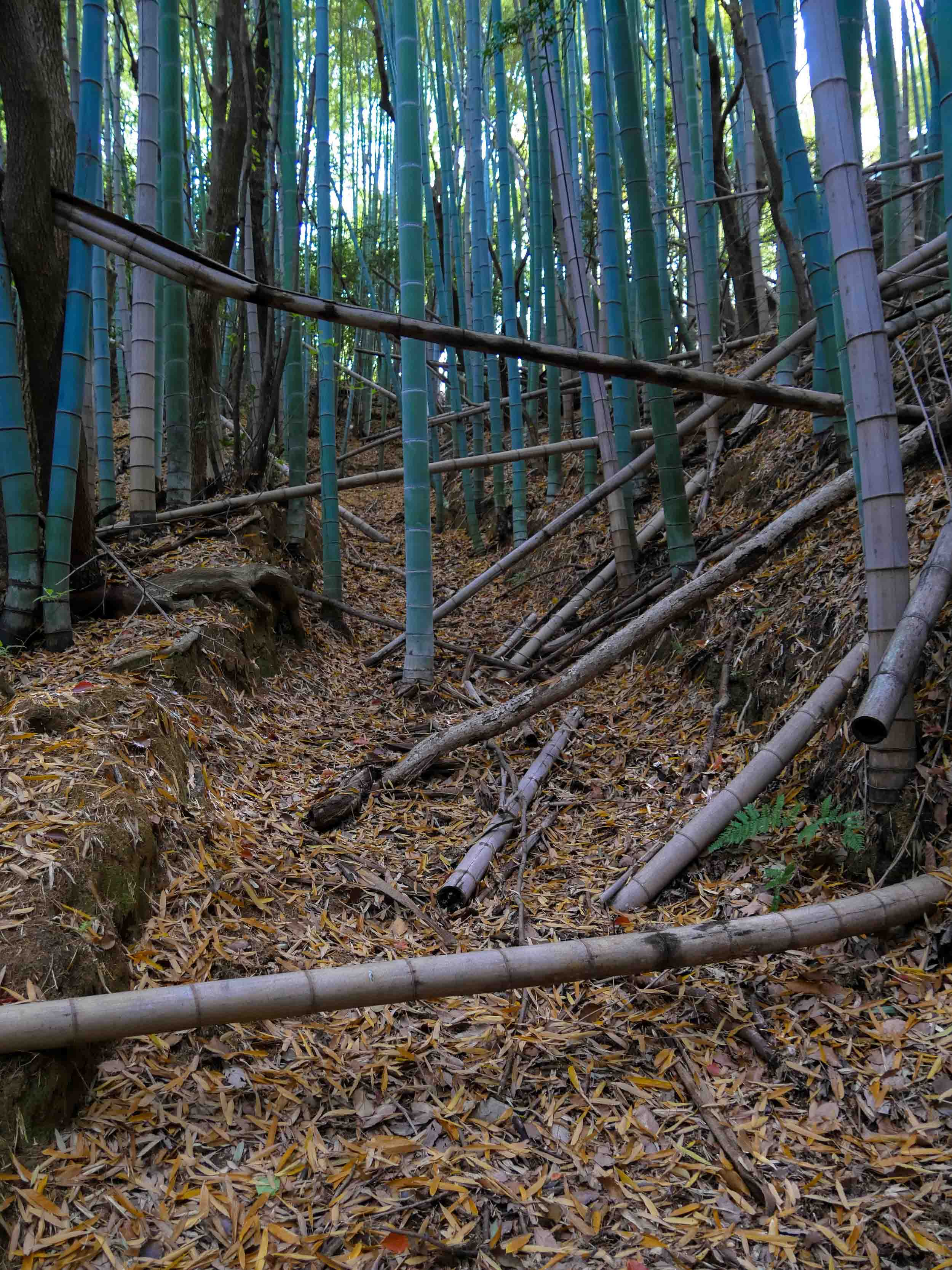 matsuyama-dougo-onsen-30.jpg