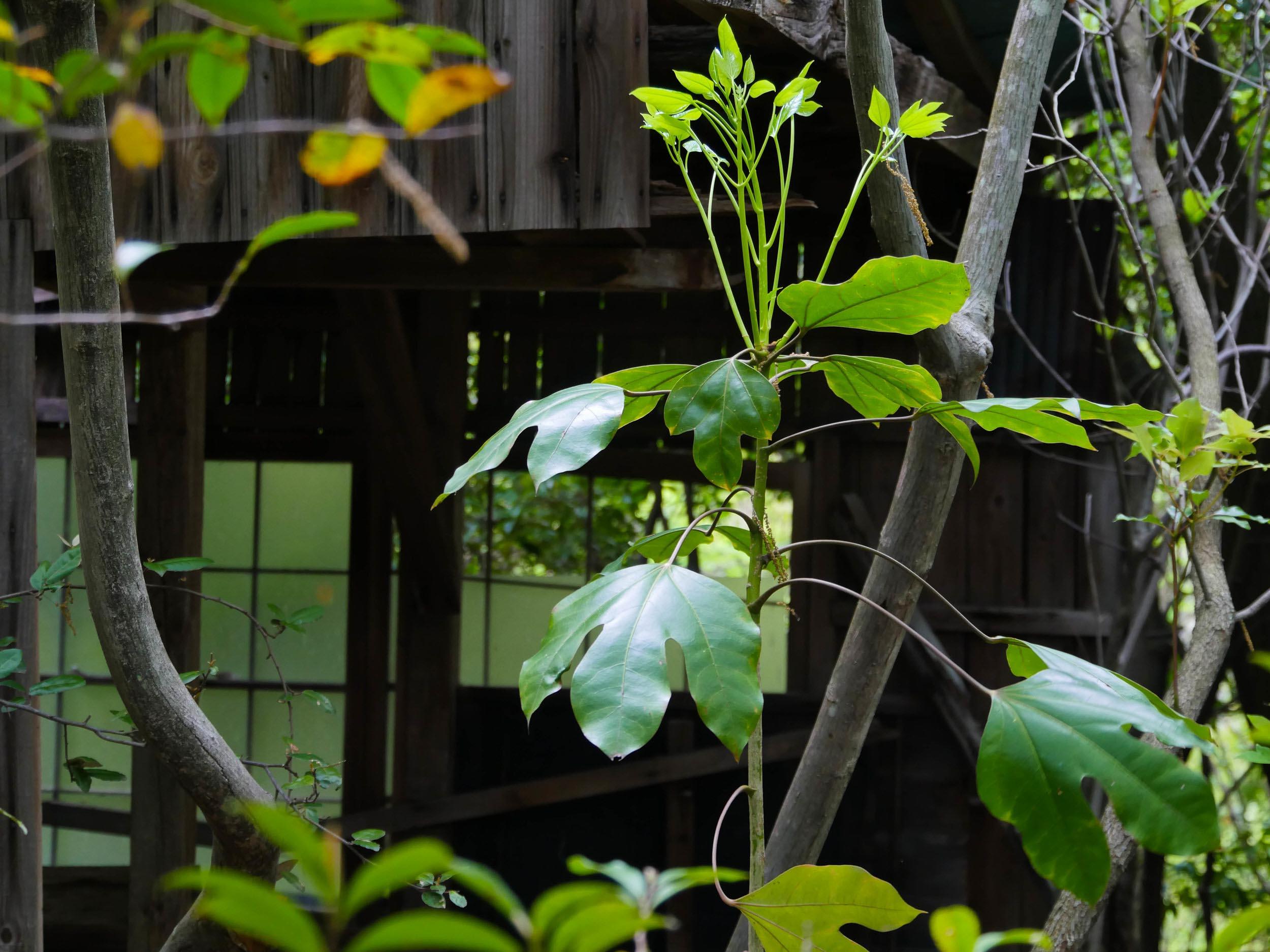 matsuyama-dougo-onsen-37.jpg