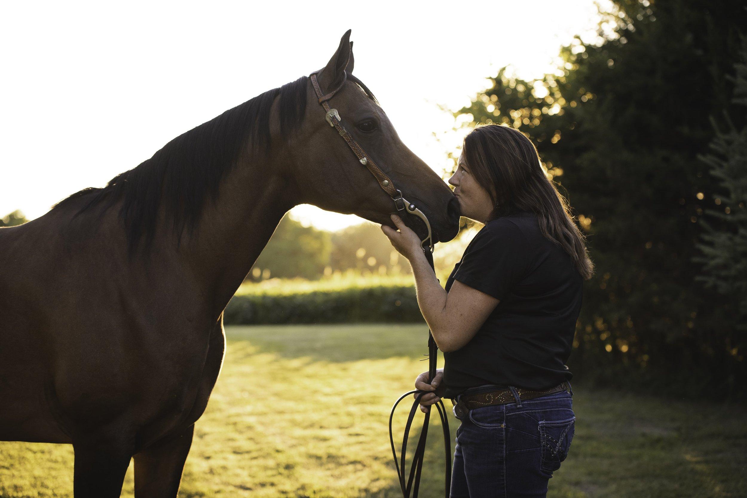 Equine Lifestyle