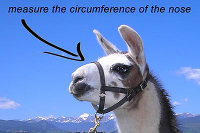 nosecircumference.jpg