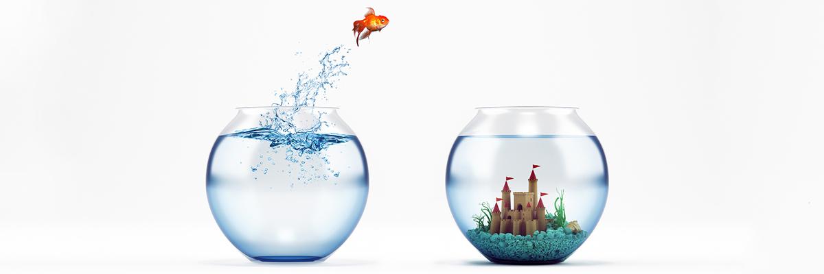 Fish jumping.jpg