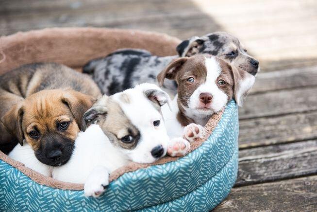 puppies_dog_bed.jpg.653x0_q80_crop-smart.jpg