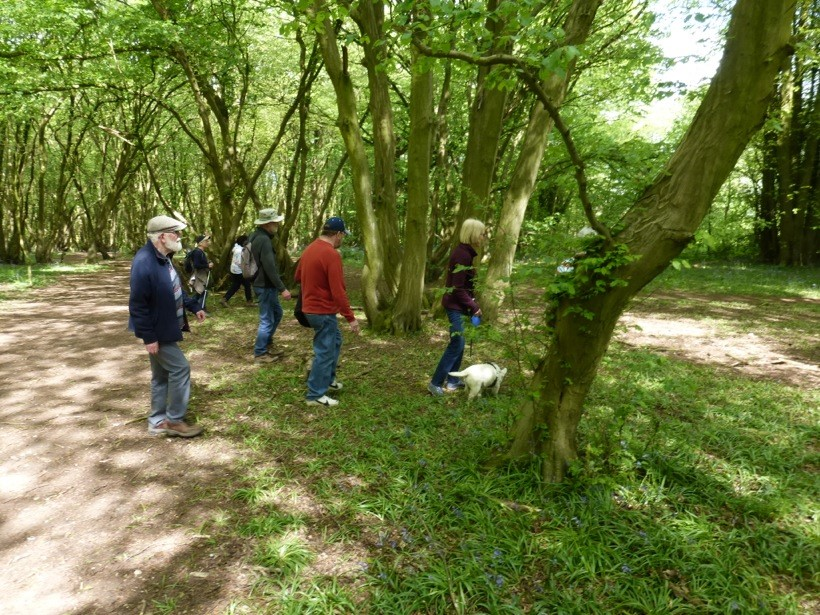 Walking in Heartwood Forest. Photo by Giles Harrison.