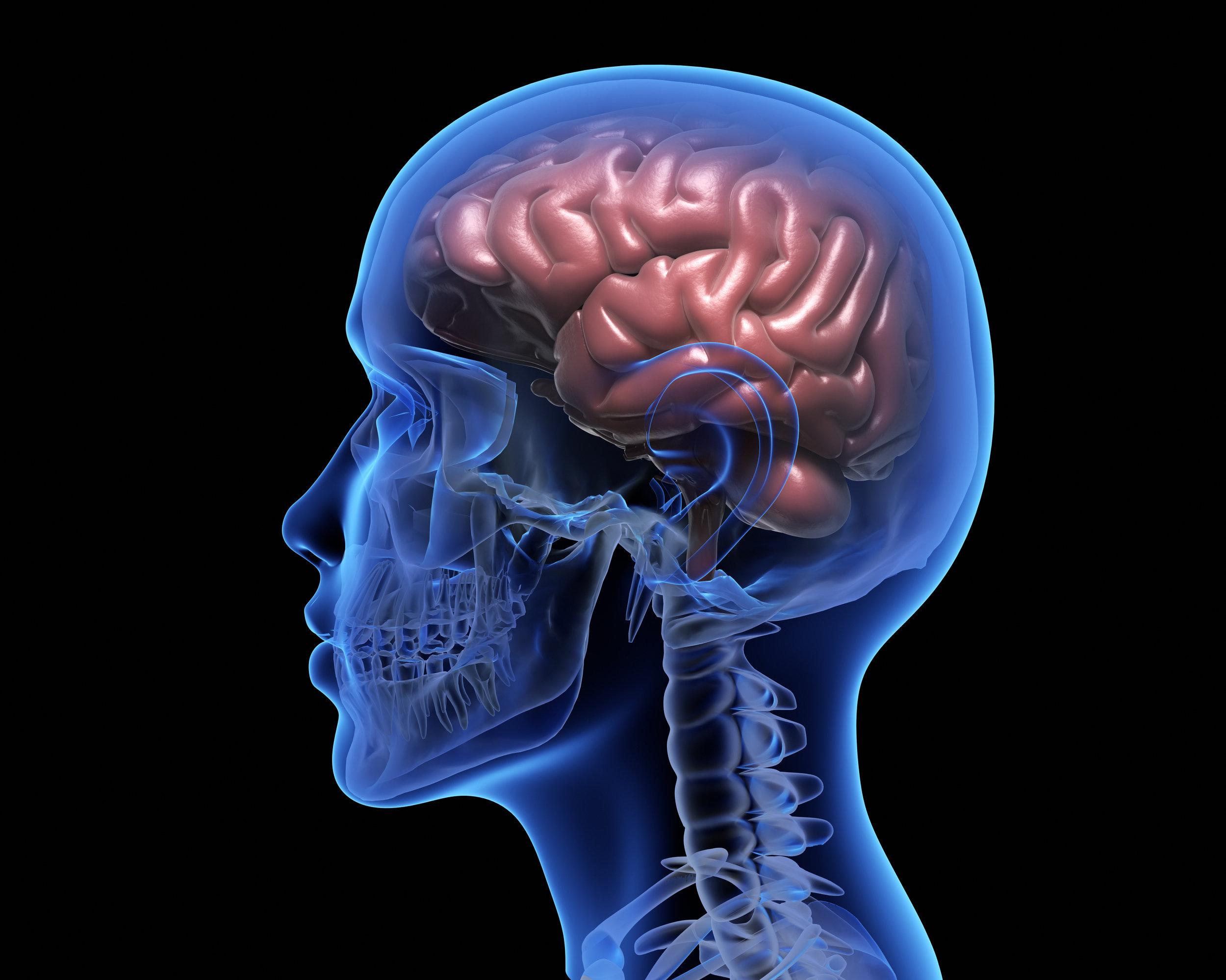 human-brain-PM656JQ.jpg