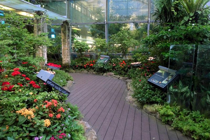 butterfly-garden-changi-international-airport-term1-min.jpg