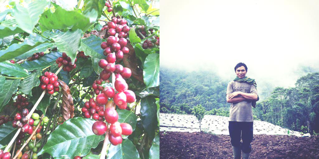 Koop Coffee Bali.jpg