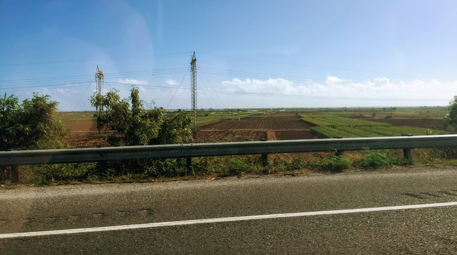 Pioneer corn fields along the highway driving from Juana Diaz to San Juan.