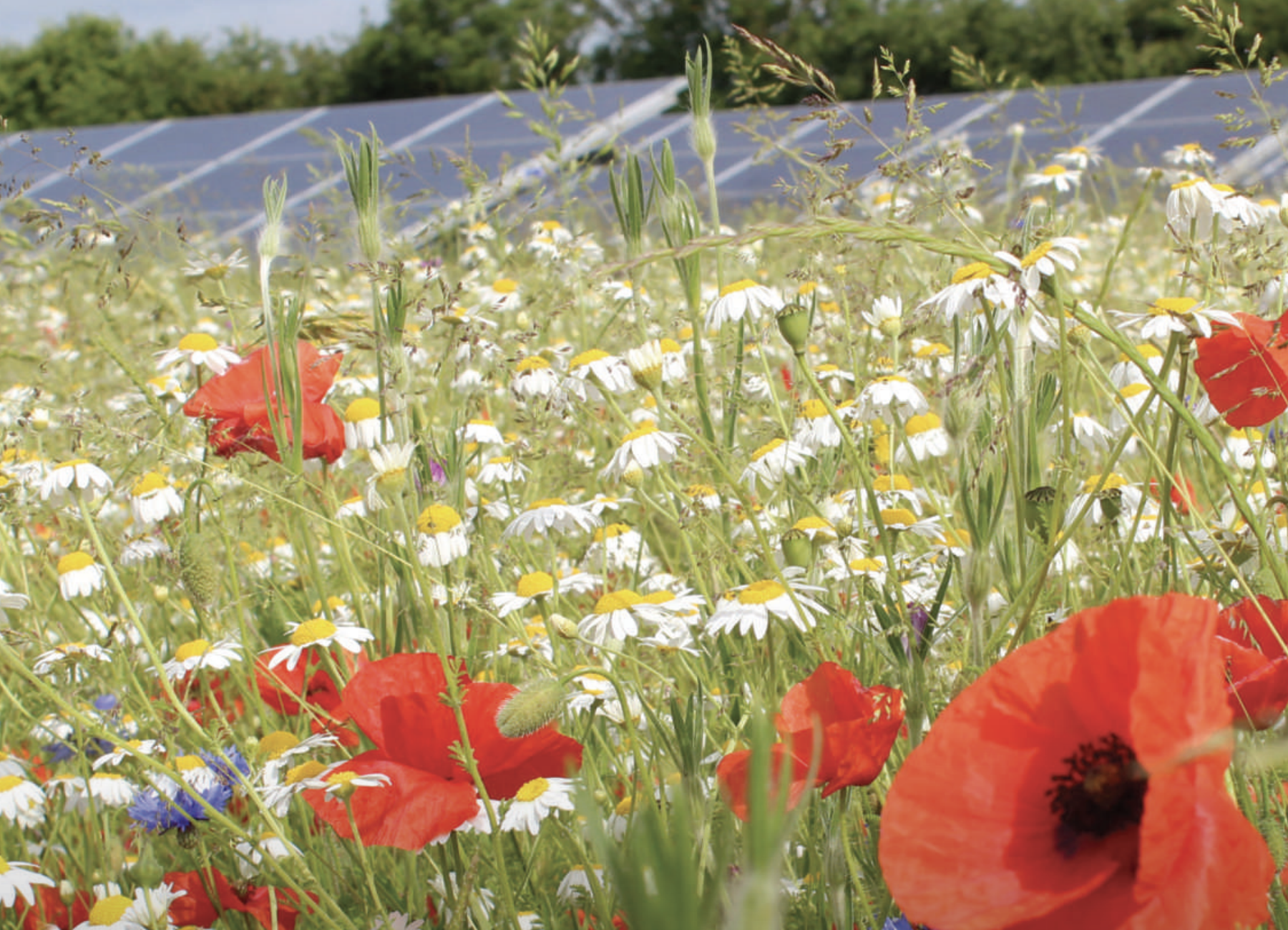 The Natural CapitalValue of Solar - Solar Trade Association, 2019Britain's large-scale solar PV industry delivering benefits for biodiversity and sustainable agriculture.