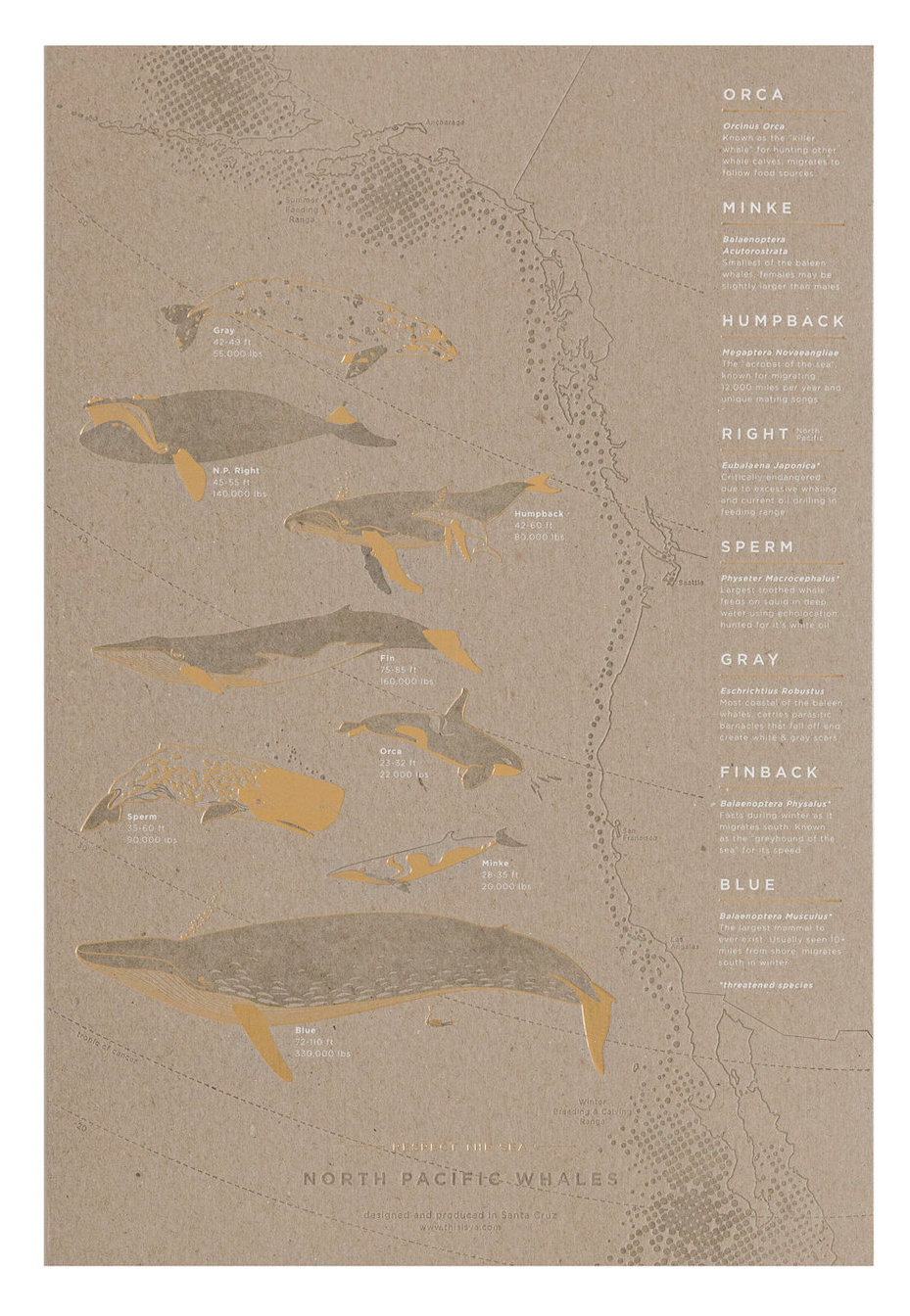 Migration Poster Series  The newest addition to the seasonal based poster series, illustrates the North Pacific Whales and their migration.  Available at Poeme